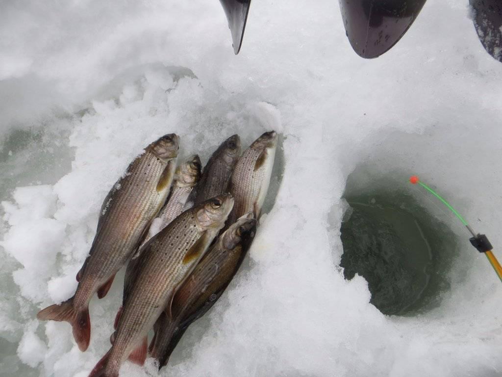Рыбалка в феврале, ловля рыбы в феврале