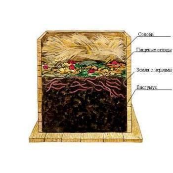 Разведение дождевого червя в домашних условиях для рыбалки