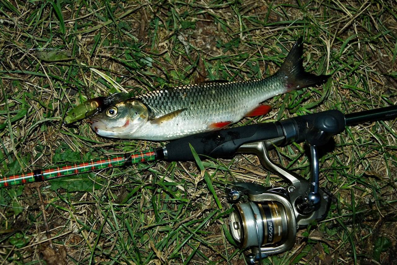 Ловля голавля нахлыстом – рыбалке.нет