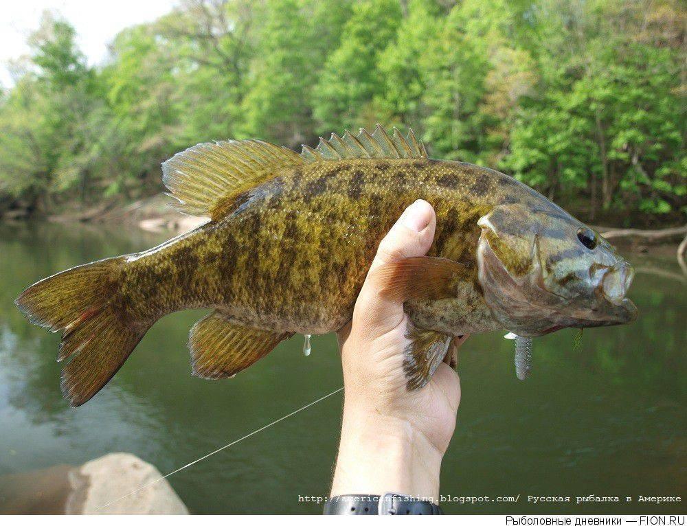 Опасная рыба из вьетнама, которую нельзя употреблять в пищу