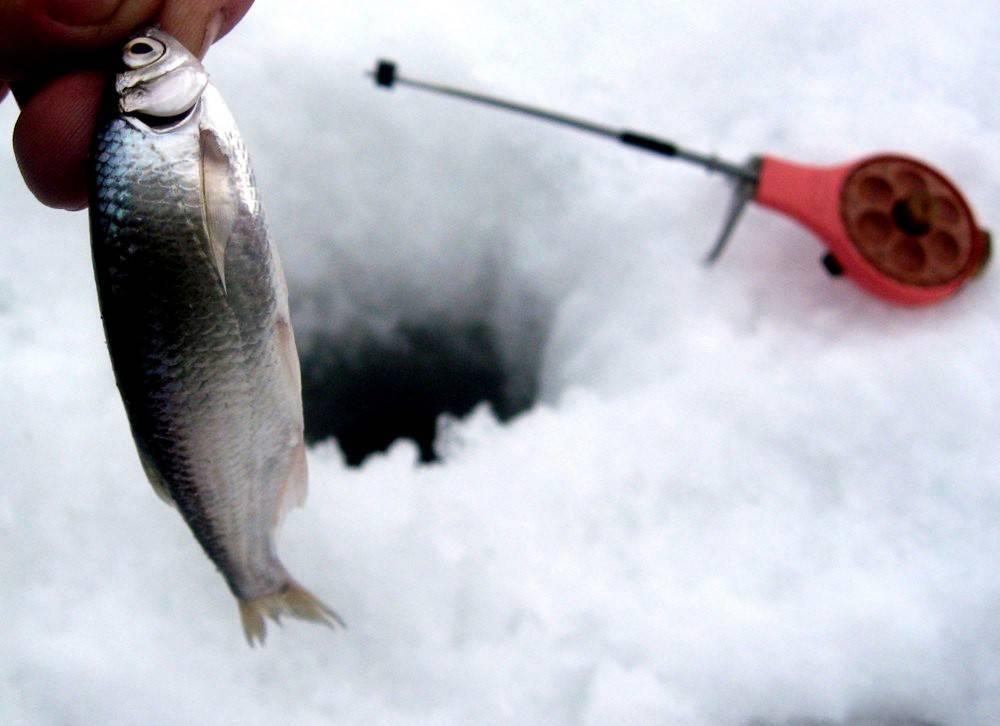 Ловля уклейки на поплавочную удочку - правильная оснастка, прикормка, приманки