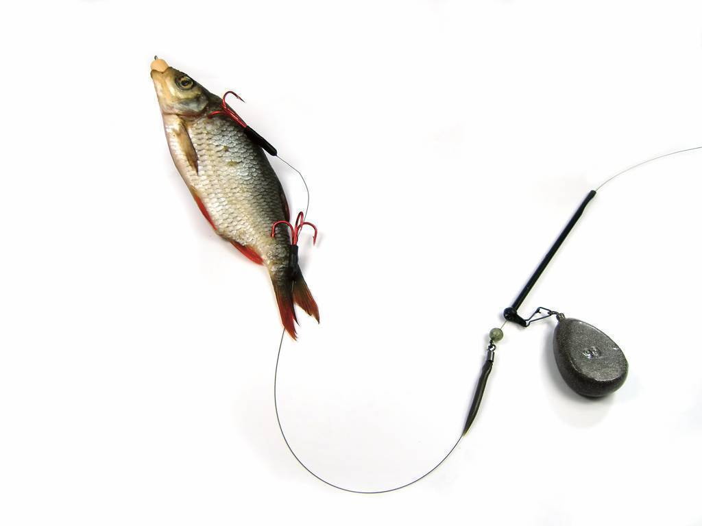 Правила ловли щуки намертвую рыбку