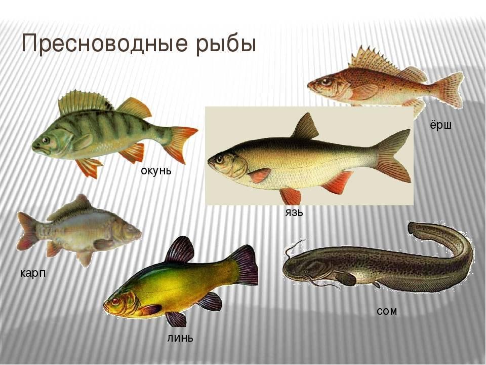 Болезни аквариумных рыб. болезни аквариумных рыбок. болезни рыбок. болезни рыб. аквариумные рыбки и их болезни.