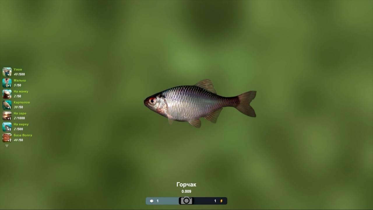 Игра «трофейная рыбалка путеводитель по игре. схемы турниров трофейной рыбалки