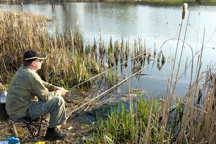 Ловля карпа ранней весной, особенности карповой рыбалки на бойлы на прудах