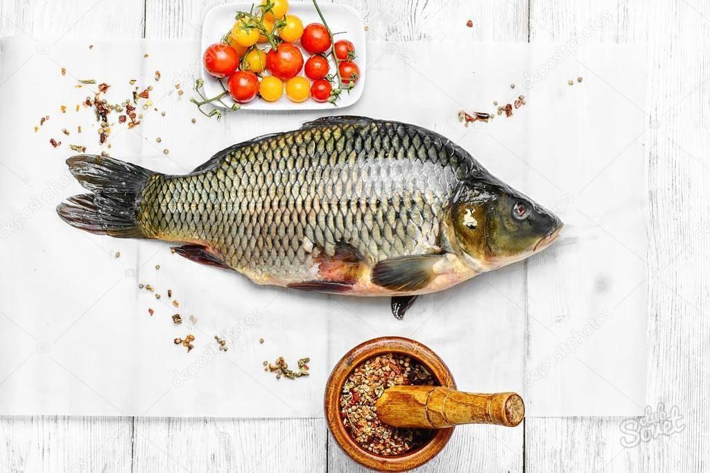 Карп — описание рыбы, польза и вред, как выбрать и рецепты приготовления на ydoo.info