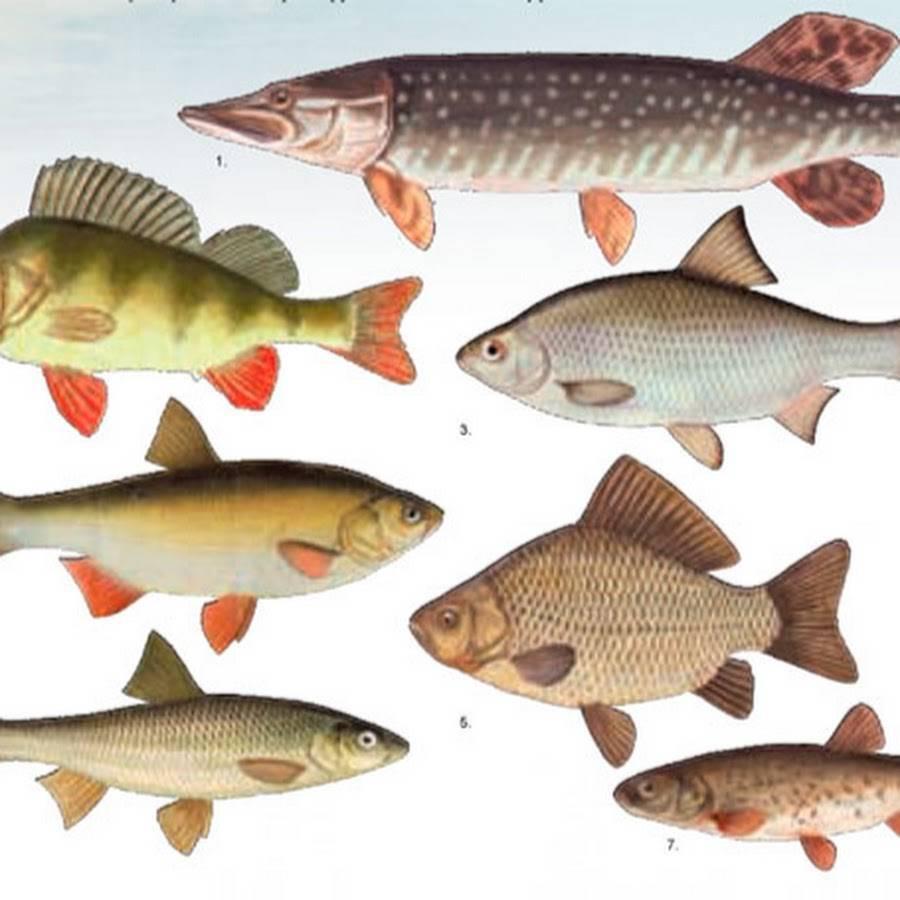 Рыбалка в раково - отзывы, цена, контакты и водоемы для ловли