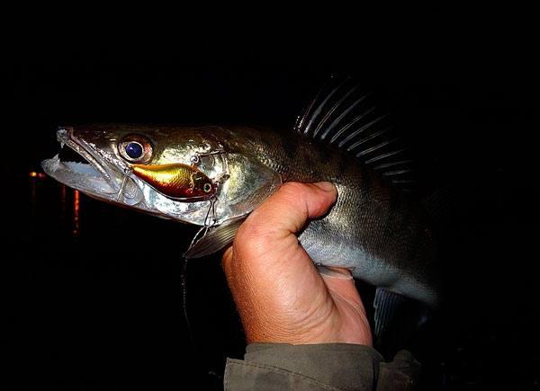 Как подобрать спиннинг для джига на судака, отзывы рыбаков