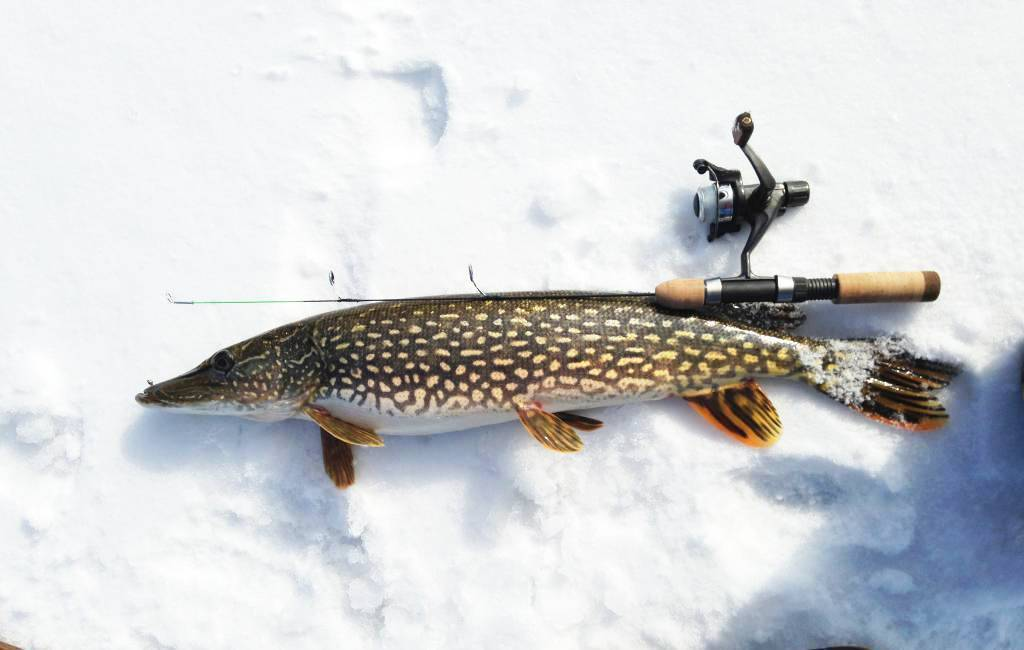 Особенности зимней рыбалки нащуку