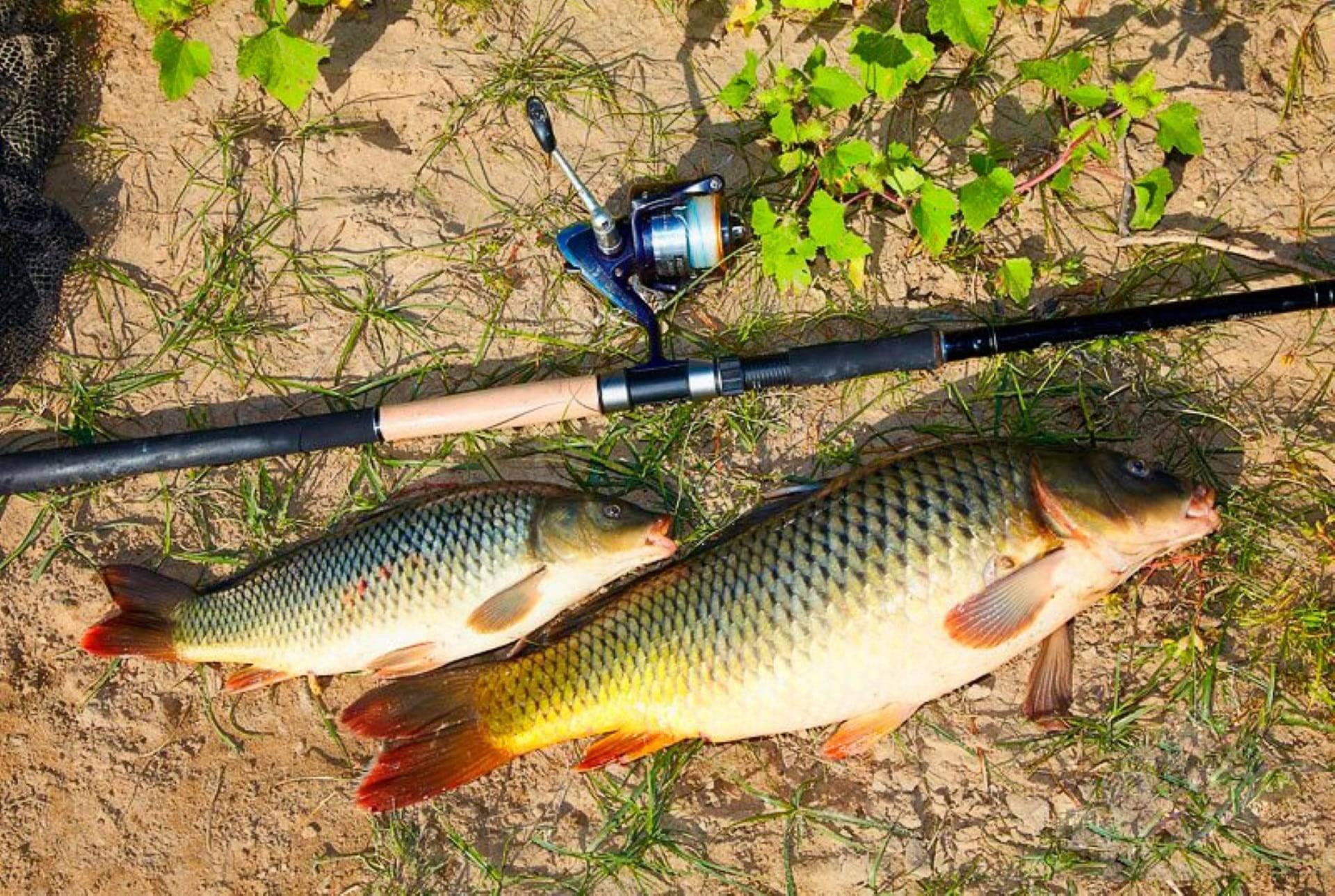 Рыбалка в самарской области | (63) карта рыболовных мест