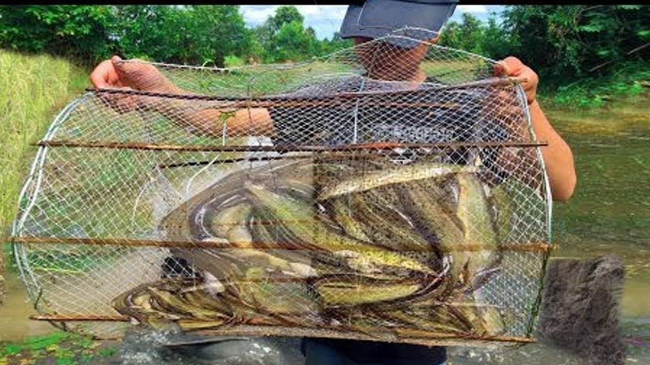 Все о рыболовной верше