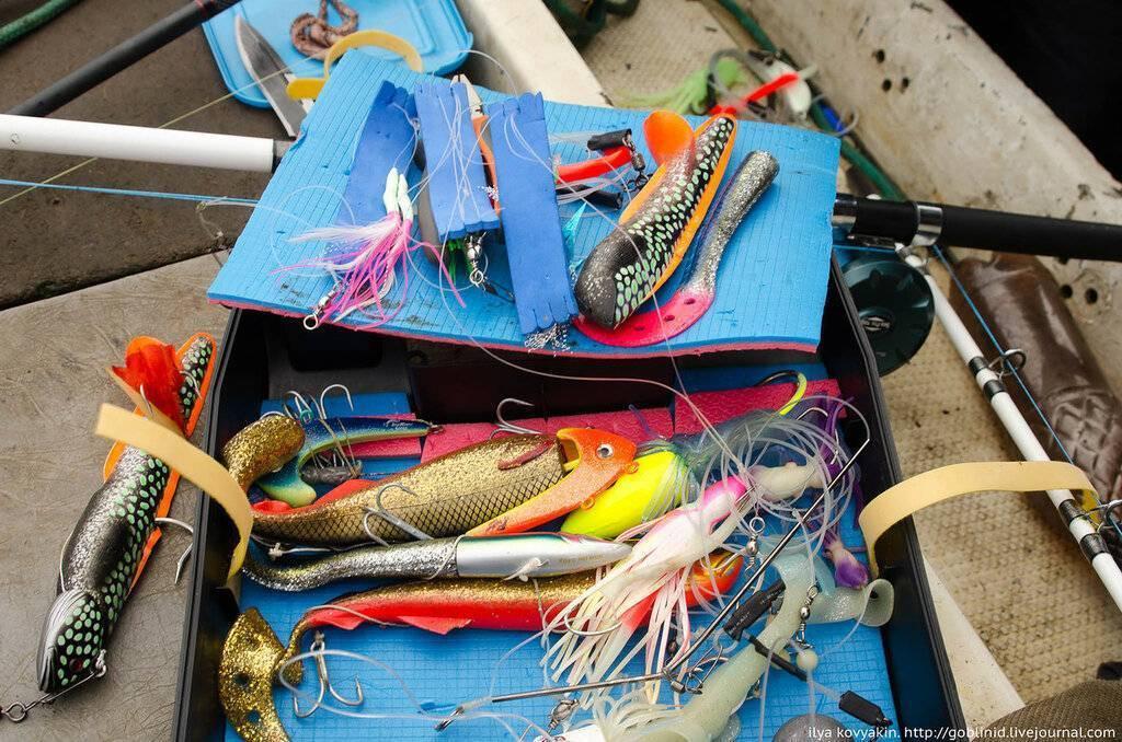 Ловля на спиннинг для начинающих в 2020 году - как ловить, снасти и приманки