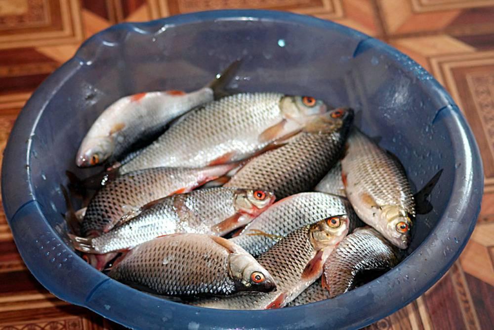 Рыба: проблемная и прибыльная | retail.ru