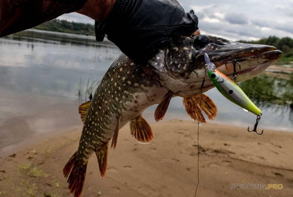 Ловля щуки осенью: снасти для рыбалки. при каком давлении лучше клюет? где искать щуку на малых реках? проводка и погода для осенней рыбалки