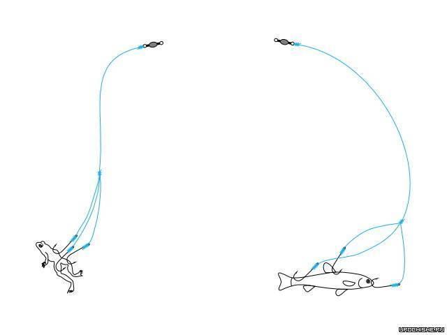 Как ловить голавля на донку?