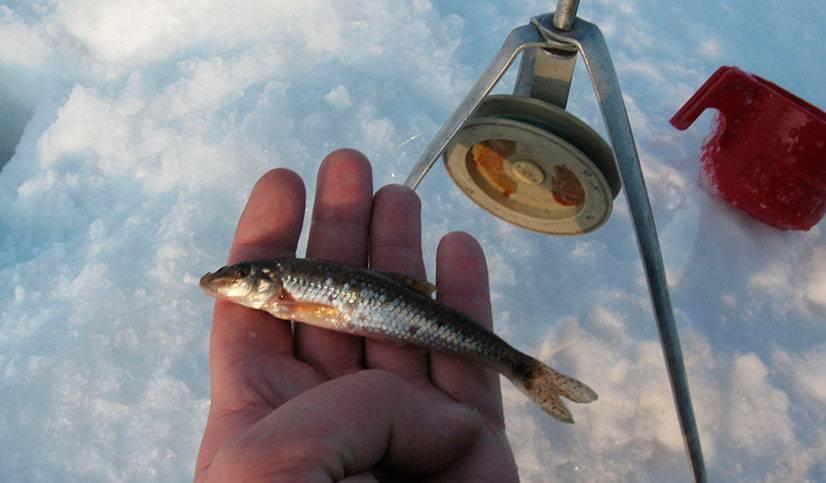 Ловля живца: какими методами поймать много малька для наживки