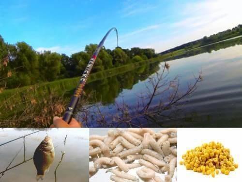 Ловля карася на поплавочную удочку - видео, летом, весной, зимой и снасти