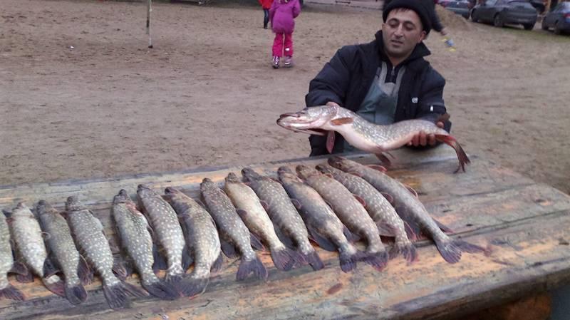 Русская рыбалка на вуоксе - особенности зимней рыбалки и на что ловить