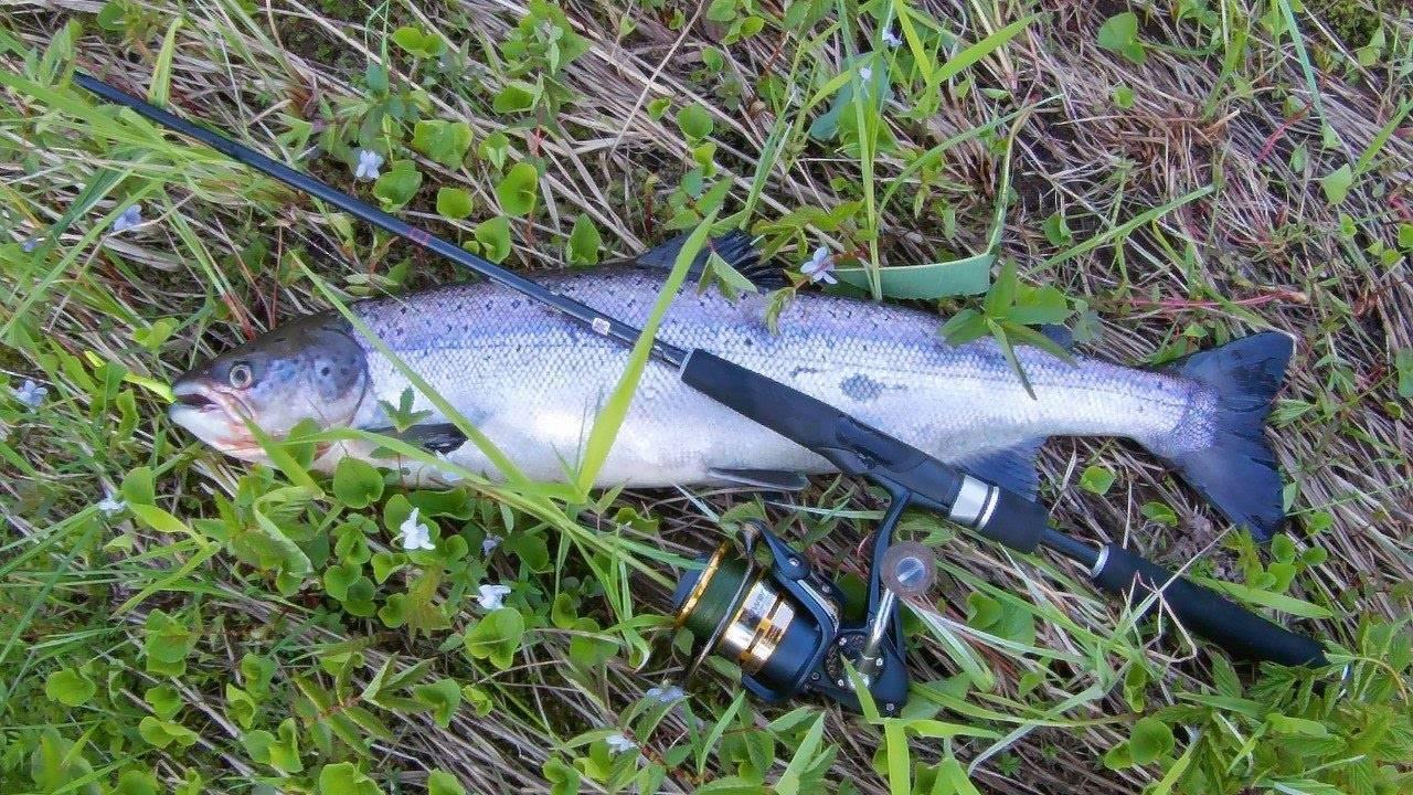 Архангельск - календарь рыболова. рыбалка в архангельске, график клёва рыбы.