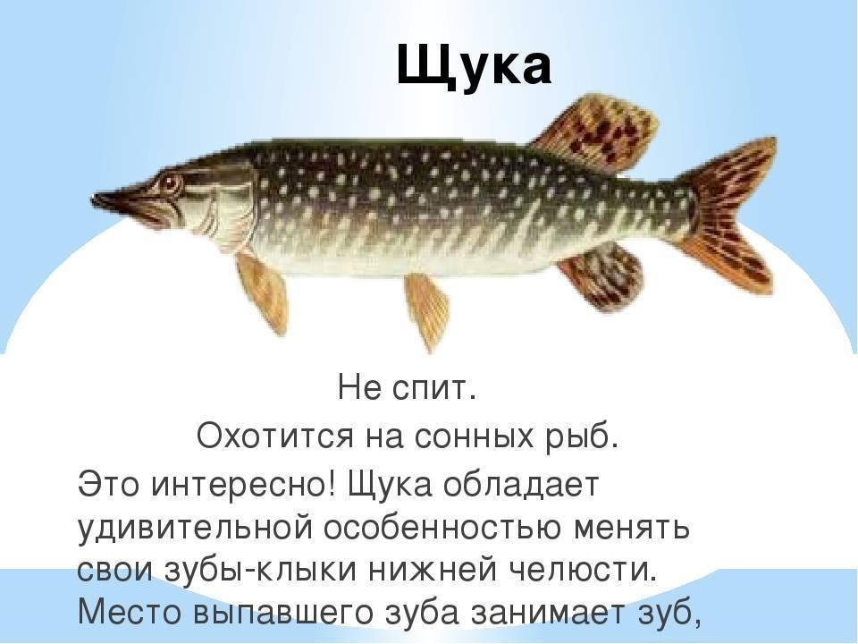 Как спят рыбы и другие обитатели морей – на глубине | on the deep
