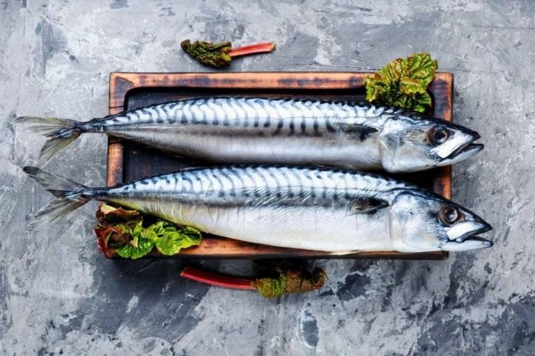 Где водится скумбрия и откуда попадает на прилавки россии: места обитания, нерест, полезные свойства рыбы