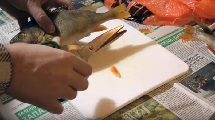Как почистить окуня: способы быстро убрать чешую в домашних условиях, обработка замороженной морской рыбы