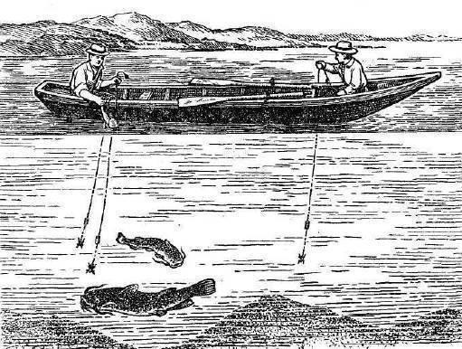 Ловля сома: способы, особенности, выбор приманки