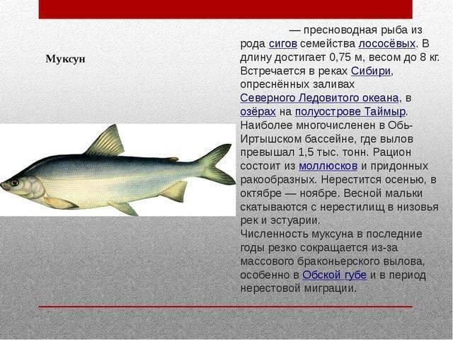 Донные речные рыбы, которые водятся на территории россии