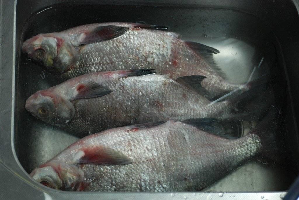 Как замариновать рыбу для копчения в домашних условиях для холодного и горячего метода