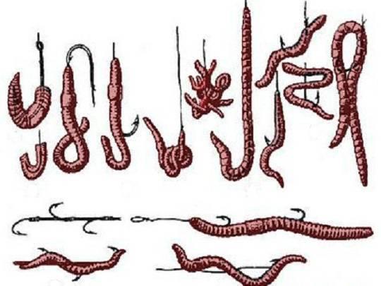 3 способа насаживать червя на крючок