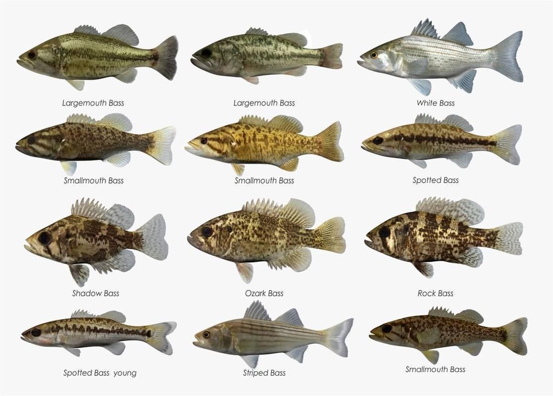 Малоротый басс рыбалка – онтарио
