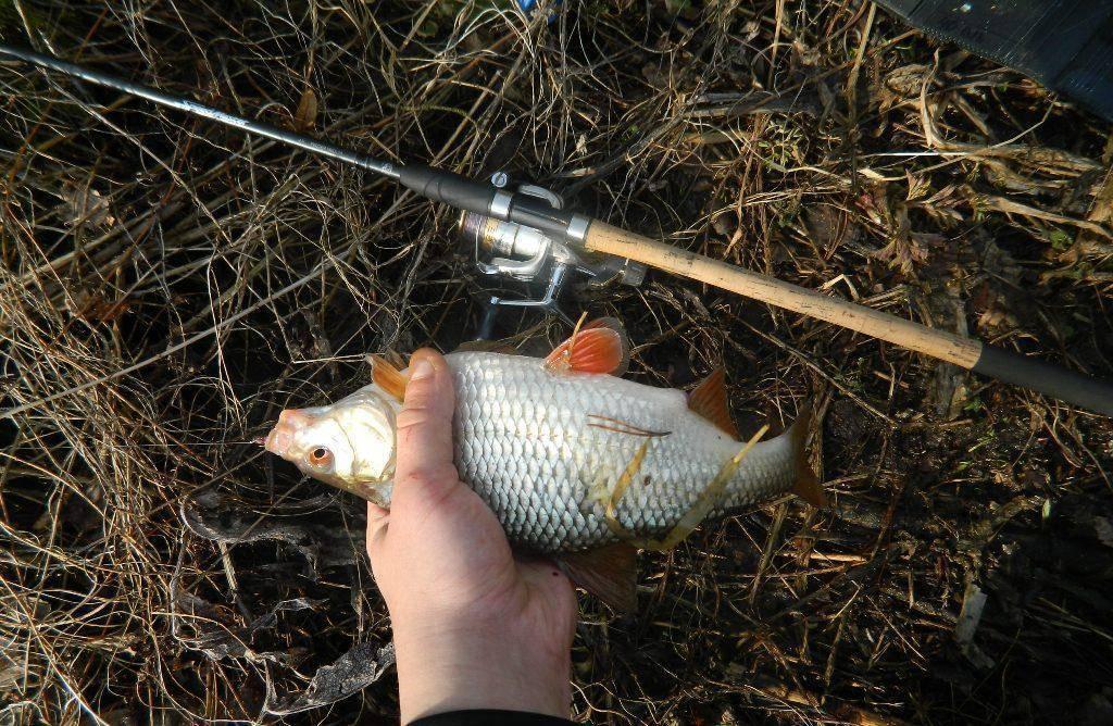 Фидер на реке, выбор места, удилища, снасти, прикормки, ловля + видео