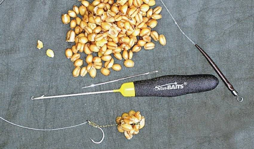 Запаривание пшеницы для рыбалки