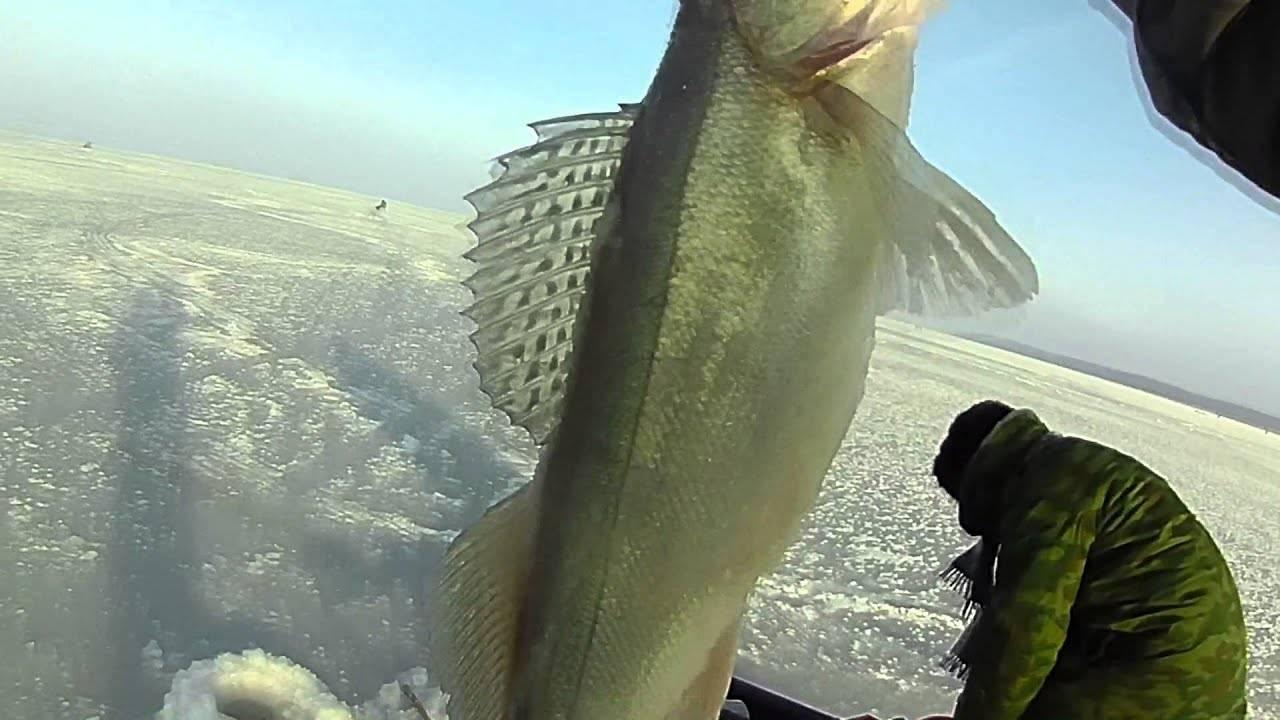 Видео о рыбалке смотреть онлайн