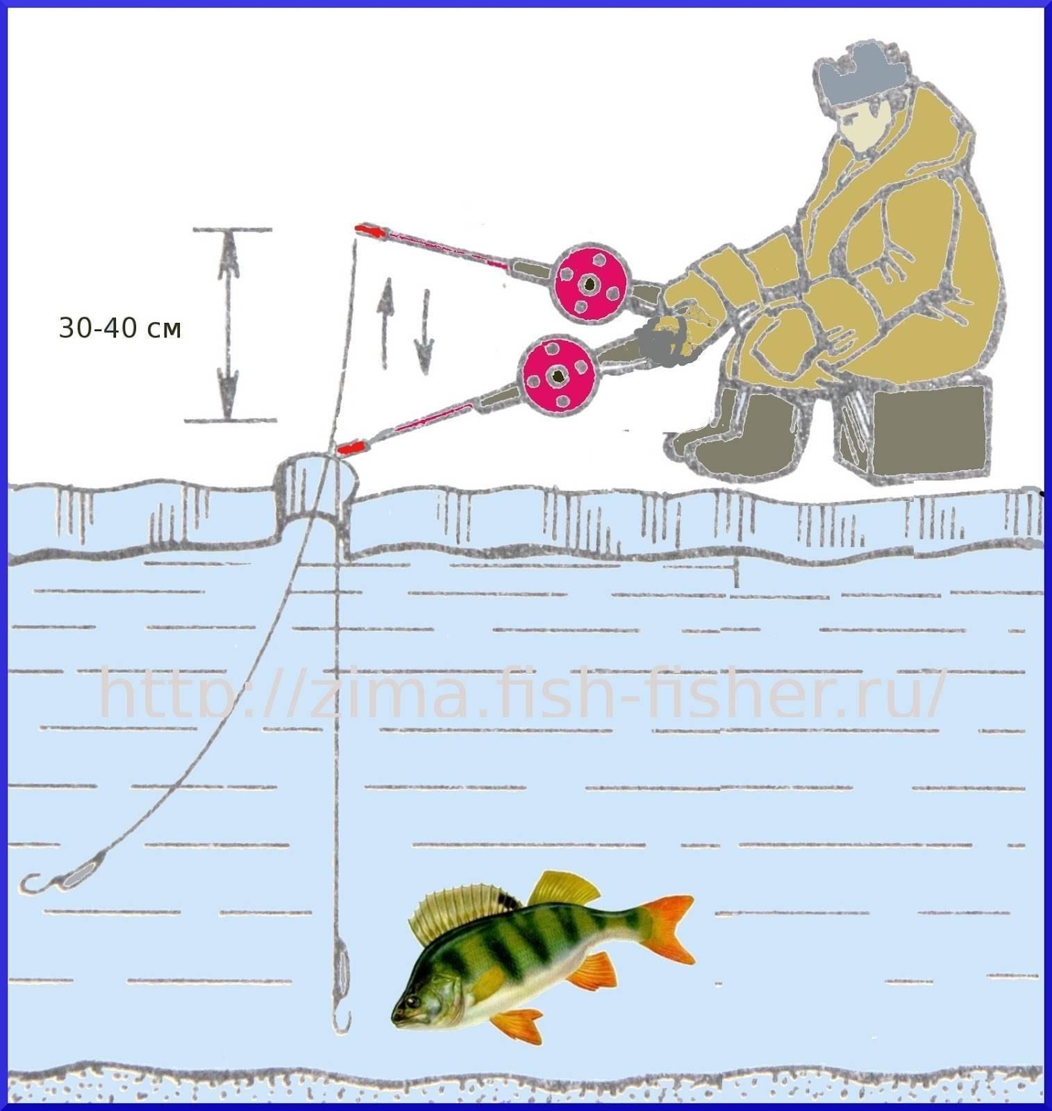 Ловля окуня зимой на блесну для начинающих и опытных рыбаков
