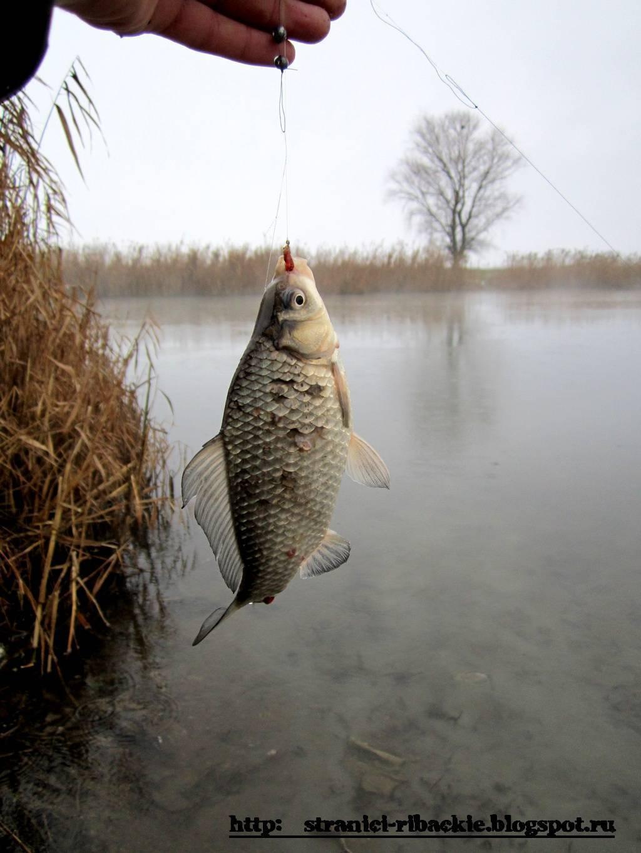 Ловля карася весной на поплавочную удочку: где его найти