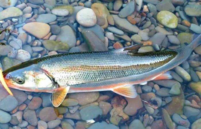 Рыбалка на рыбу список рыбы россии и мира в россии и мире   клуб кузьмич - сайт о рыбалке
