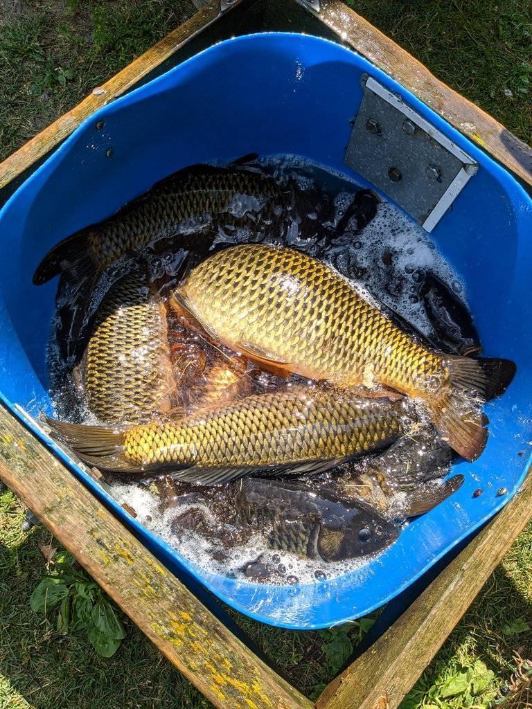 Платная рыбалка и рыболовные туры в уральском фо