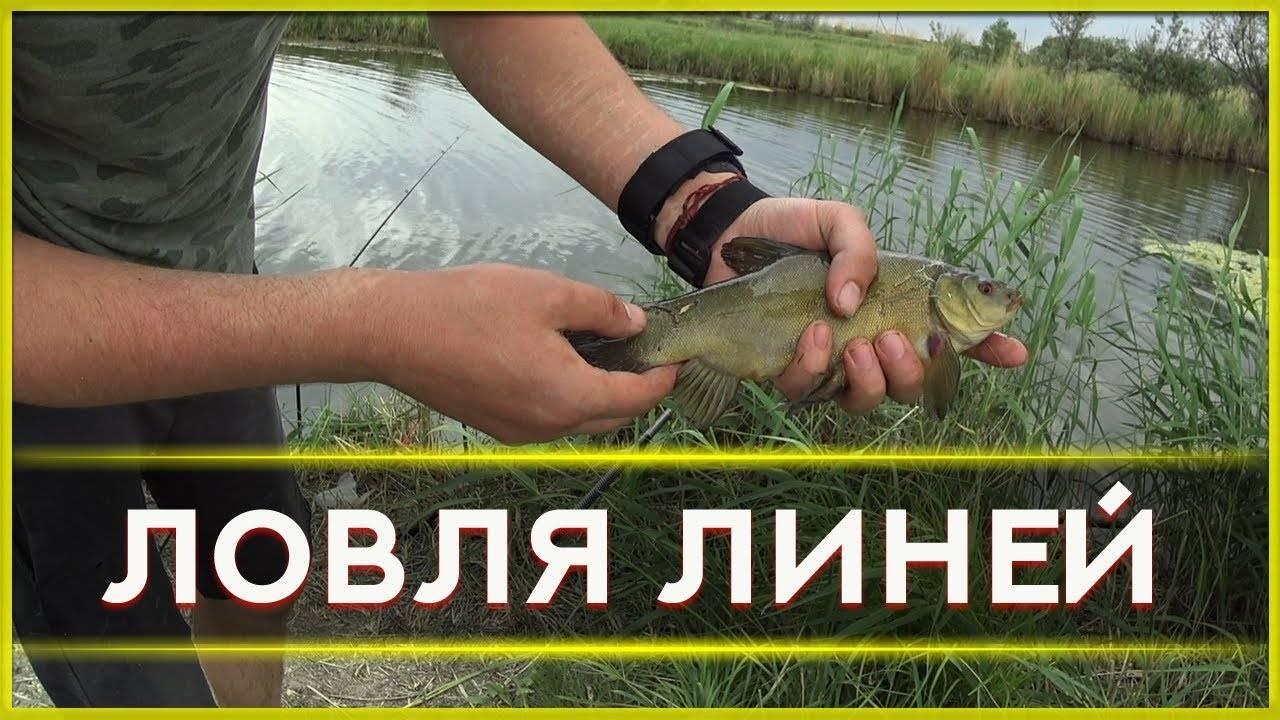 Секреты линёвой рыбалки