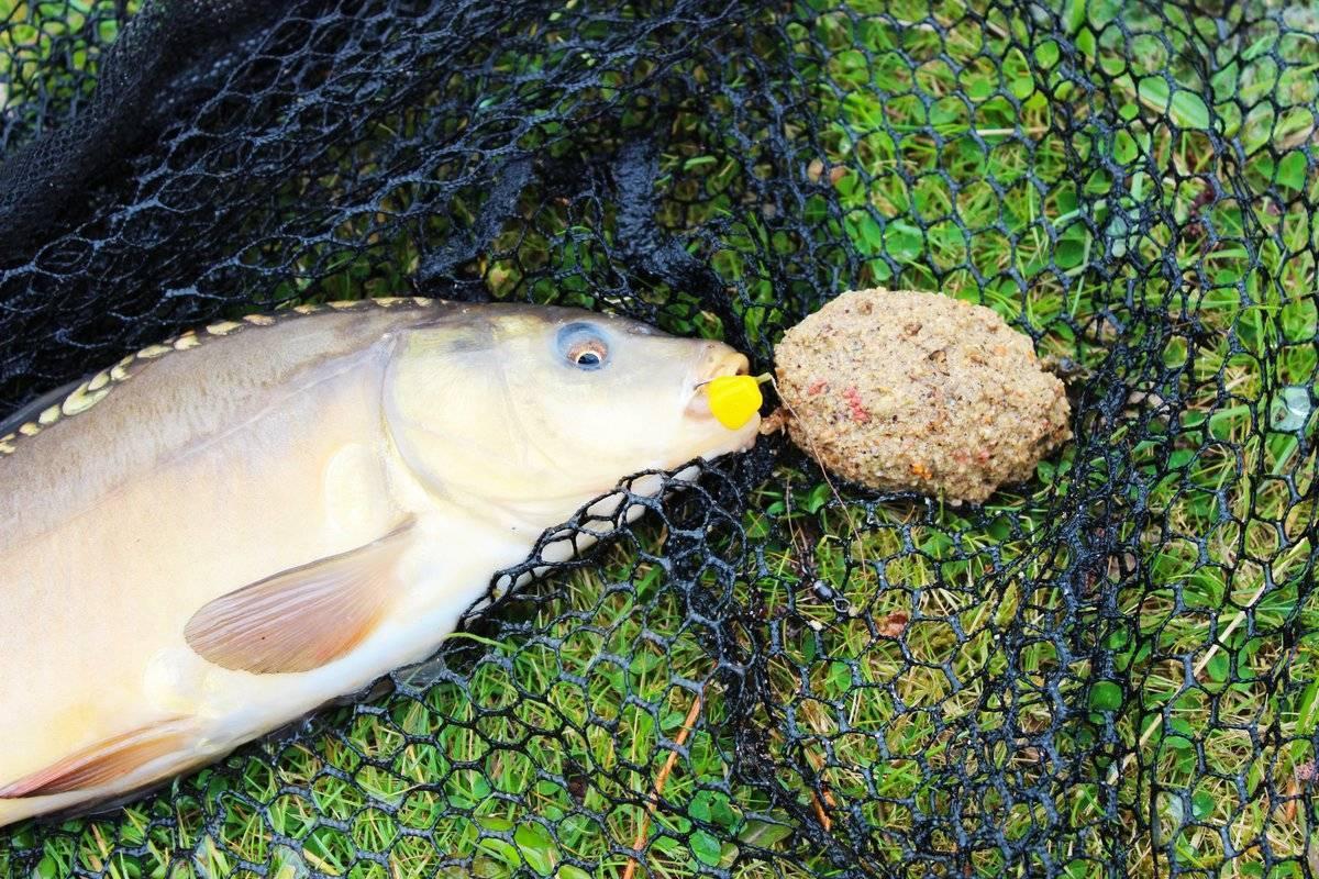 Секреты уловистых мест для ловли леща в сентябре на фидер и поплавок