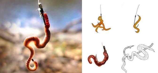 Как насадить червя на крючок и сделать это правильно? насадка на карася, леща, карпа и силиконового червя