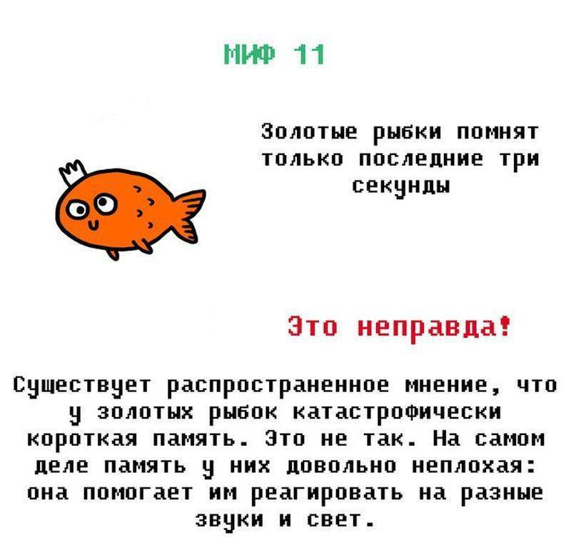 Какая память у рыбки, эксперименты и факты