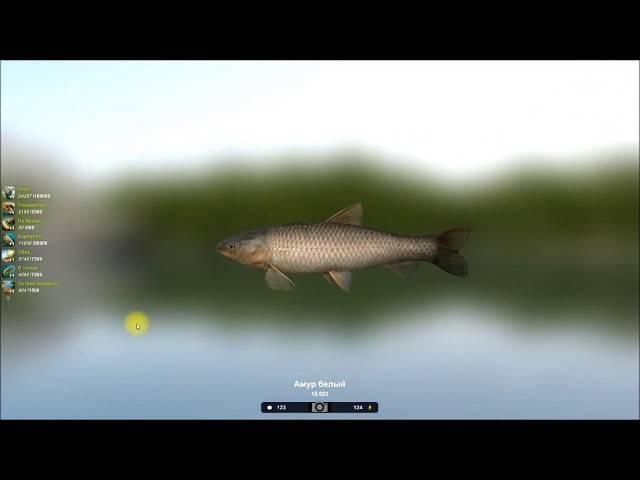 На что ловится рыба - белый амур, как поймать его на пружину?