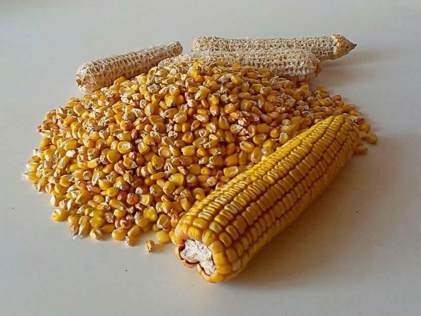 Кукуруза для рыбалки: метод ферментации и ароматизации смесей, рецепты приготовления в домашних условиях