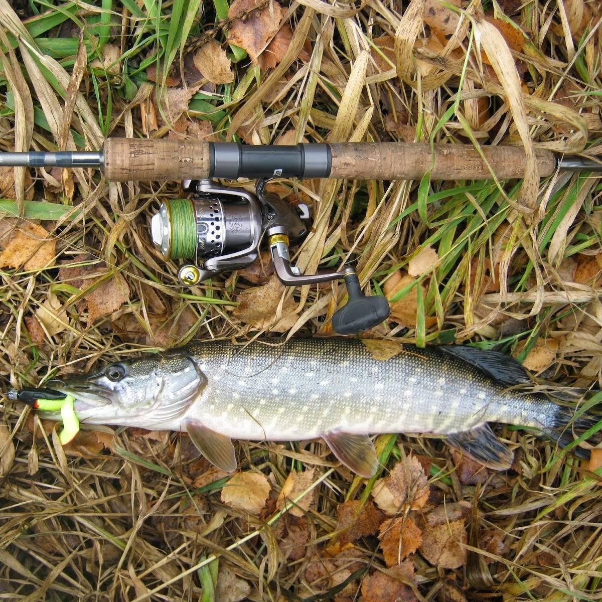 Особенности ловли щуки летом, подбираем приманки, настраиваем снасти – рыбалке.нет