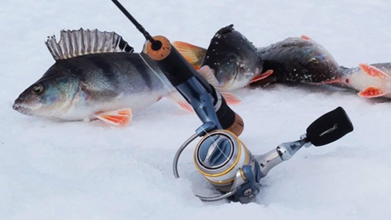 Аксессуары для зимней рыбалки: необходимые снасти и секреты их эффективного применения (90 фото)