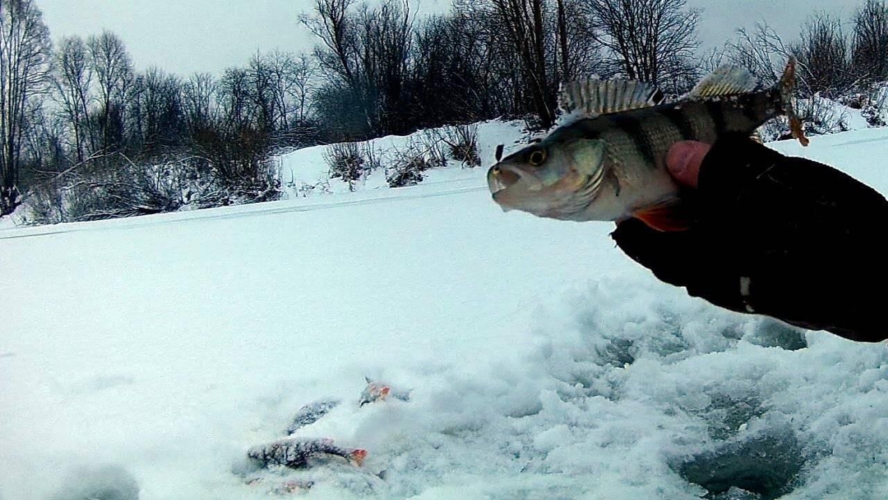 Рыбалка в феврале: какую рыбу ловить в феврале