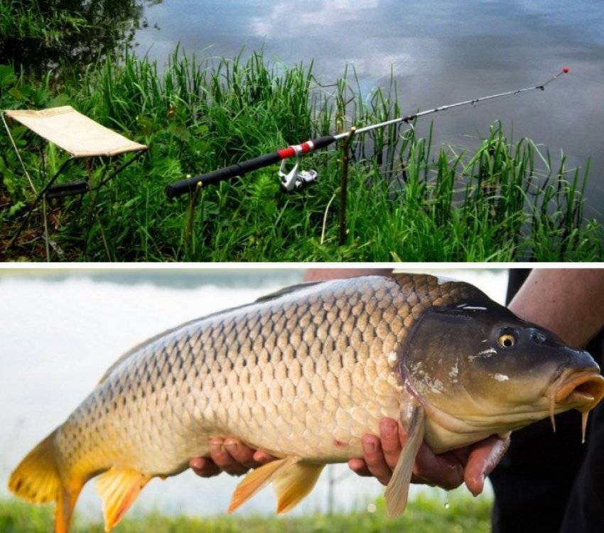 Ловля сазана осенью: где лучше ловить в сентябре, октябре и ноябре? на что лучше клюет на реке и в пруду? приманки для ловли в стоячей воде и в других местах