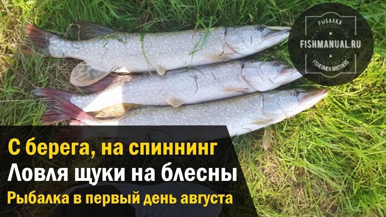 Нововсти о рыбалке – интересные статьи и лайфхаки для рыболова