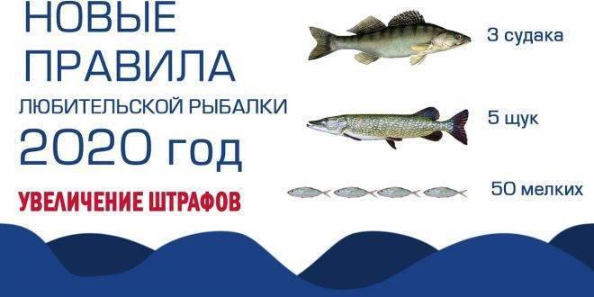 Бесплатная рыбалка в подмосковье: нормы вылова, лучшие водоемы